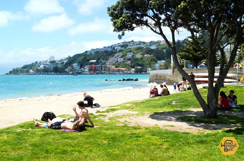 晴れた日には近くのビーチで日光浴