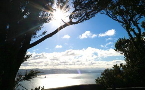 ウェリントン、晴れた日の朝の散歩の風景