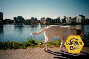 ダウンタウン近辺では犬の散歩をしている人を多く見かけます