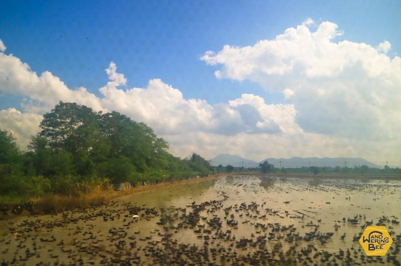 車窓から見える、タイ田舎の湿地帯