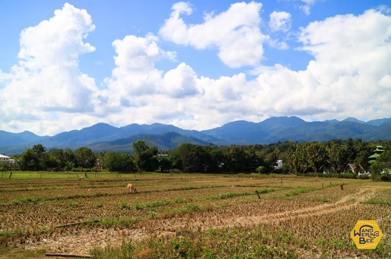 永遠に広がるかのような、田舎の光景