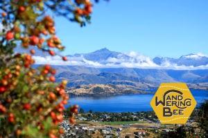 ニュージーランドの夏はカラッと晴れていて快適