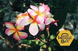 ラン島のいたるところに咲いていたカラフルなお花