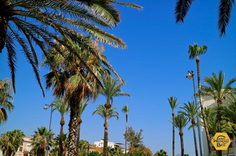 抜けるような青空の日々が続くバレンシア