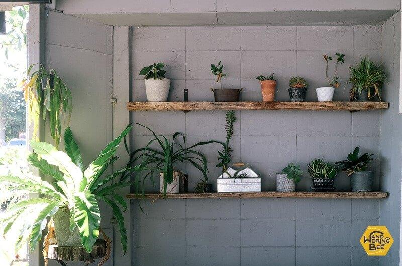観葉植物が飾られたTaste Cafeの入り口