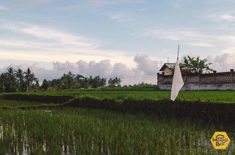 日本の田舎を連想させるウブドのライスフィールド