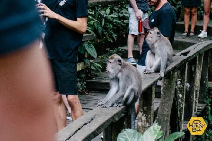 モンキー・フォレスト周辺を縄張りとする猿たち