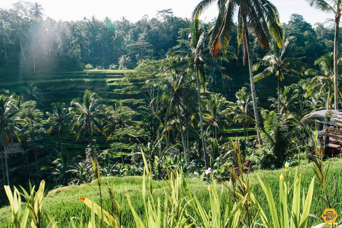 緑に溢れた心癒される環境が広がるバリ島